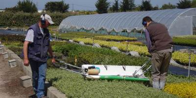 Pépinière, production de jeunes plants arbustes